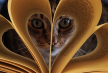 .:Well Read Kitty:. / Books and cats. What could be any better than that...well shoes books and cats I suppose...