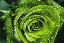 Green with envy / by Michelle Cohron-Penrose
