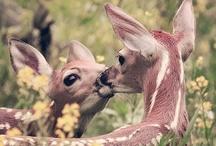 .:Doe a deer a female deer:. / All things deer!