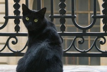 .:Gato Negro:. / The black cat..... :) :) :) Dedicated to my 16 year old all black cat Lennon and his sister McCartney who has black on her back... xoxo