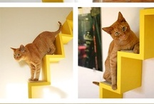 .:Cat Trees, Houses and other fun feline stuff:. / Cats need things too!