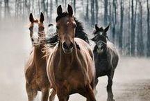Horses / Cavalos / by Gabi Medina
