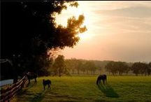 I Want a Farm / I want a farm, with horses mostly. / by Catherine Marshall