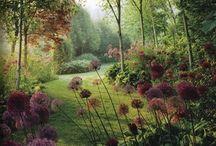 Dream garden / by Heidi Noel