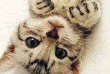 So Cute! cats, dogs, animals and adorable stuff / cute animals and humans