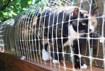 Animal Information & Care