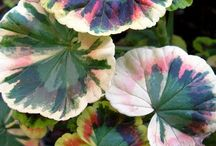 Garden / Garden ideas and plant info / by Cathie Lundry