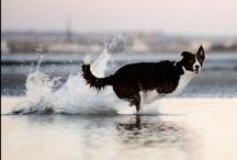 Dogs / by Jessie Stevens