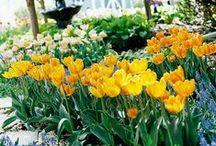 couleurs : yellow is my sunshine / vanille, jaune paille, beurre frais, jaune poussin, bouton d'or, citron, miel, jaune soleil, tournesol... la gamme des jaunes compte d'innombrables nuances... encore une couleur que je ne citerais pas spontanément parmi les deux ou trois que je préfère mais j'aime sa lumière, sa gaîté, son éclat... quelques rayons de soleil réunis pour vous... / by Isabelle de Beukelaer