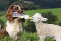 les amitiés particulières / parce que l'amour et l'amitié se moquent bien des histoires de races... même (surtout ?) chez les animaux !...