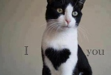"""i {heart} cats / j'aime les chats (je crois que ce n'est plus un secret pour personne - lol !), tous les chats, mais je réunis ici ceux qui """"ont un cœur""""... je le sais, tous ont un cœur, bien sûr, mais ici il est dans le dessin du pelage, dans la pose, dans le décor... parfois, même, ils se mettent à deux pour nous offrir un cœur !... voici quelques jolies photos de """"chats avec un cœur"""" ! / by Isabelle de Beukelaer"""