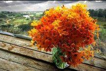 """couleurs : l'orange dans tous ses états... / incontournable pendant les 70's, symbole de sagesse pour les bouddhistes ou offrant ses feux au coucher du soleil, il (re)devient régulièrement à la mode avant de (re)tomber en désuétude... il prête son éclat à de nombreuses teintes : pêche, saumon, abricot, mandarine, orange vif, tango flamboyant... on pourrait parler d'""""oranges"""" s'il se mettait au pluriel* : toutes ses nuances sont ici pour illuminer vos journées !... (*oui, Nini : ici, le mot est invariable, je confirme !) / by Isabelle de Beukelaer"""
