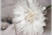 """couleurs : white is white / beaucoup de gens pensent que le blanc n'est pas une couleur... pourtant il a, lui aussi, ses nuances, ses reflets, ses éclats... depuis toujours, j'aime le blanc... j'aime """"les"""" blancs... / by Isabelle de Beukelaer"""