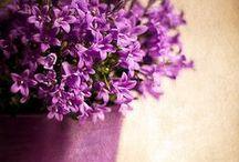 """couleurs : purple rain... / violet, pourpre, lavande, améthyste, mauve, lilas, parme... il a tant de nuances qu'on ne saurait les nommer toutes !... couleur du """"demi-deuil"""" ici, de la pensée et de la philosophie ailleurs, couleur de religion, couleur de """"dignité"""", et même, dans certaines civilisations, couleur de la sagesse, j'ai pour lui une certaine tendresse... voire une tendresse certaine... / by Isabelle de Beukelaer"""