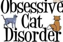 tout sur les chats... ou presque... / soyons honnêtes : si il est toujours possible d'écrire un livre sur ce que nous savons des chats, on remplirait une bibliothèque avec tout ce qu'on ignore d'eux !!!... c'est que cette bestiole tient à entretenir le mystère : imprévisible, hermétique jusqu'à l'insupportable, on l'adore, ce matou, mais reconnaissons qu'il y a des moments où on aurait des envies de chaticide !... mais on l'aime... et il le sait... et, souvent, il en profite, le petit monstre !!!... / by Isabelle de Beukelaer