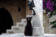 tous les chats du Monde... / les chats sont partout pareils... les paysages changent... leurs conditions de vie aussi... mais les chats restent les mêmes... leurs attitudes, leurs regards, leur beauté... tous les chats du Monde se ressemblent... et pourtant, chaque chat est unique... allez comprendre... encore un mystère félin...