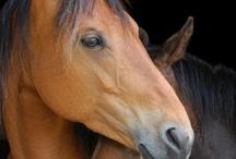 chevaux...