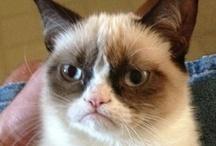 Cats / because cats...duh...