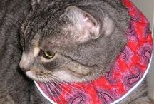 Birdsbesafe® cat collar covers that save birds from cats / At Birdsbesafe® LLC, we sell our original, unique products -- they are patent pending cat collar covers that use bright colors to alert a bird that a cat is nearby. Birds fly away to safety easily, because songbirds see bright color preferentially in the environment. Join us at birdsbesafeDOTcom We help birds be safe!