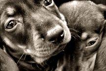 + furry friends we love / by 20 Best Twenty