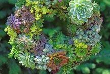 Crafts | Wreaths / Wreath Tutorials and Ideas
