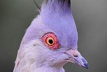 purple nurple / by the sparklette