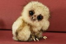 Cute Little Animals / I love pictures of cute little animals, they are so adorable, aren't they