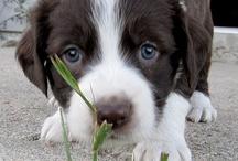 Man's (anyone's) best friend / Dogs / by Karen Hamilton