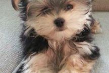 Too Cute Tea Cup Puppies / by Nisha Taylor