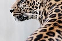 where the wild things are / Animal prints / by Karen Hamilton