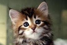 cats beauty