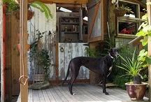 Gwal y Filiast / Lair of the Greyhound Bitch / by Lindsay Evans