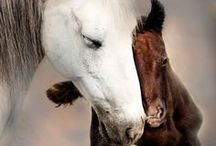 HORSES - GREAT and SMALL / Now I saw heaven opened, and behold a white horse.  And He who sat on him was called Faithful and True.....Rev. 19:11