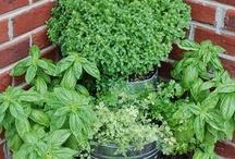 GARDENING / How does your garden grow? Veggie's, Herbs and Flowers