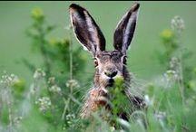 EARS to HEAR / Ohh~Those Ears