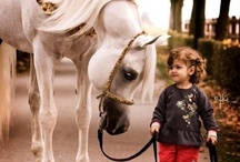HORSES - Girls Who Love Them / That very special affection that they never out grow~