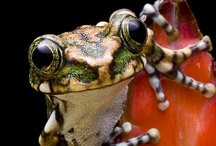 FROGS - TOADS - LIZARDS / Unusual - Cute - Colorful ........NO Snakes
