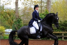 HORSES - DRESSAGE