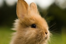 BUNNITS / From a Bunny to a Rabbit - they are all precious. / by Rethal Conkle