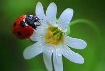 Ladybug Love / I love ladybugs (also called ladybirds). / by Michelle Frick