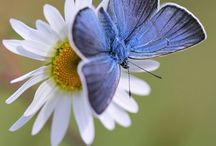 Insects / Beautiful and amazing insects!
