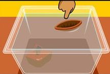Science: Sink or Float