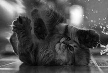 meowth thats right / KITTTTTTTTTTTTTTTTTTTTTTTTTTTYYYYYYYYYYYYYYYYYYYYYYYYYYYYYYYYYYYYYYYYYYYYYYYYYYYYYYYYYYYYYYYYYYYYYYYYYYYYYYYYYYYYYYYYYYYYYY / by Jessika Bernstone