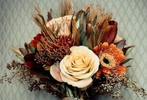 Fall in love / Did you know September and October are rising as popular wedding months? Warm colors and crisp ideas are to be explored here!