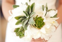 Succulent Love / These plants represent endurance and longevity and are visually interesting and easy to maintain.