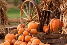 Thanksgiving/Fall / by Brad N Ann Moore