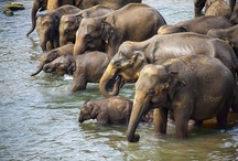 ..Elephants / by Zack Neil
