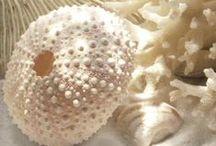 seashells / by Maryam Arif