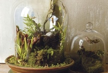 Terrariums / by Hartshorn Portraiture