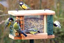 Jardin - Oiseaux, Insectes utiles / by Cannelle ♥♥♥